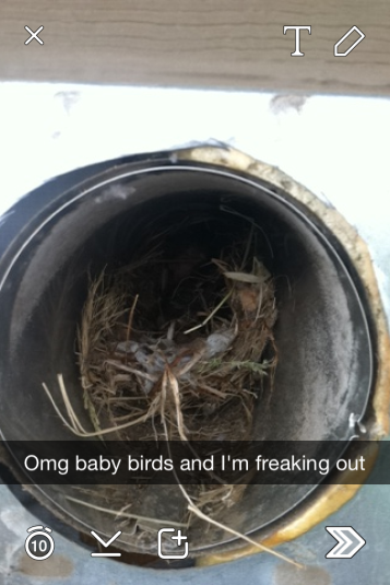 4 little babies....hanging out in my vent for who knows how long exactly!