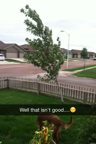 When you go outside and discover your tree having technical difficulties.